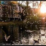 new bird pictures / neue Vogelbilder