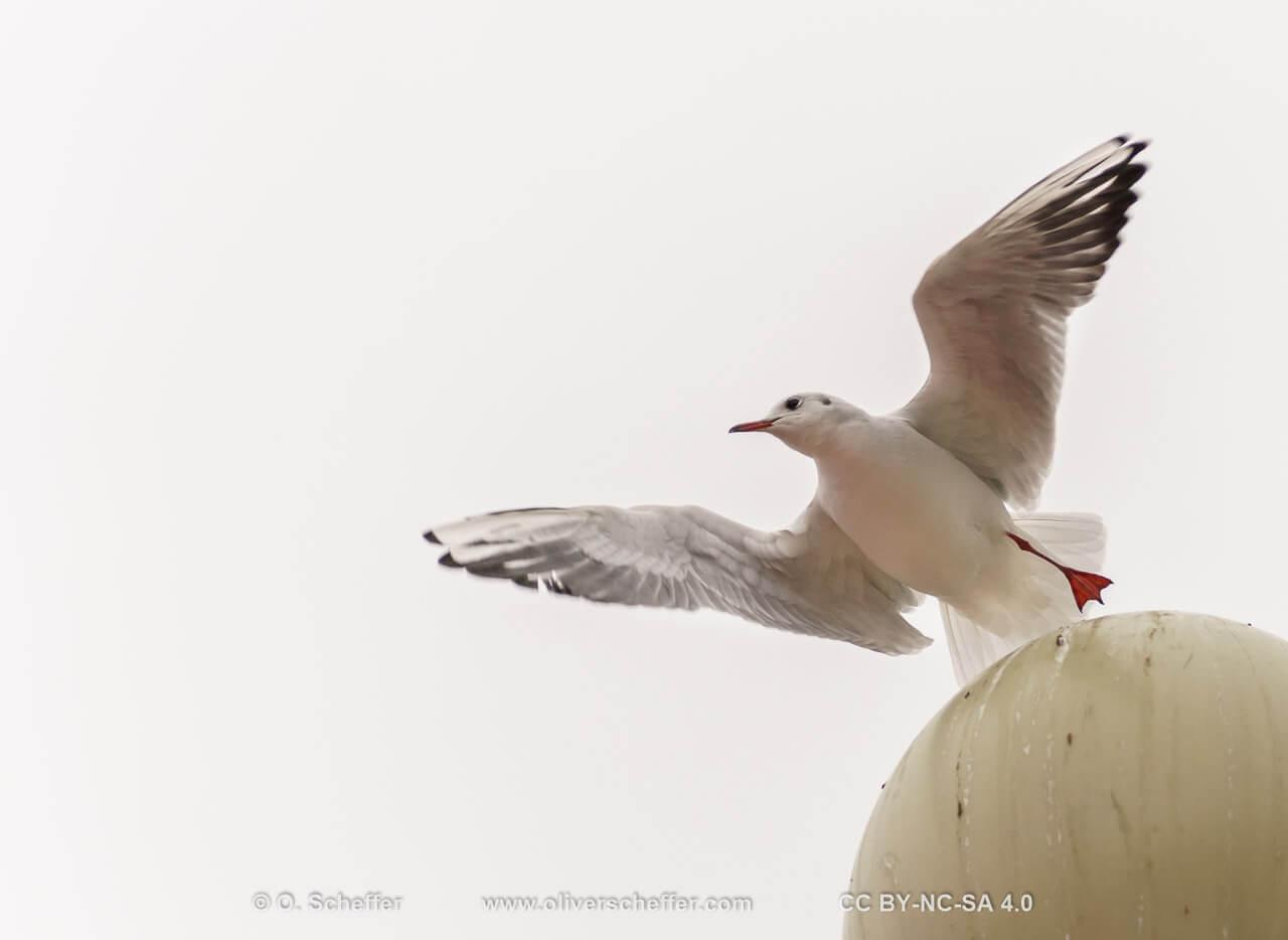 seagull on a lantern