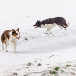 Hunde im Schnee / dogs in the snow