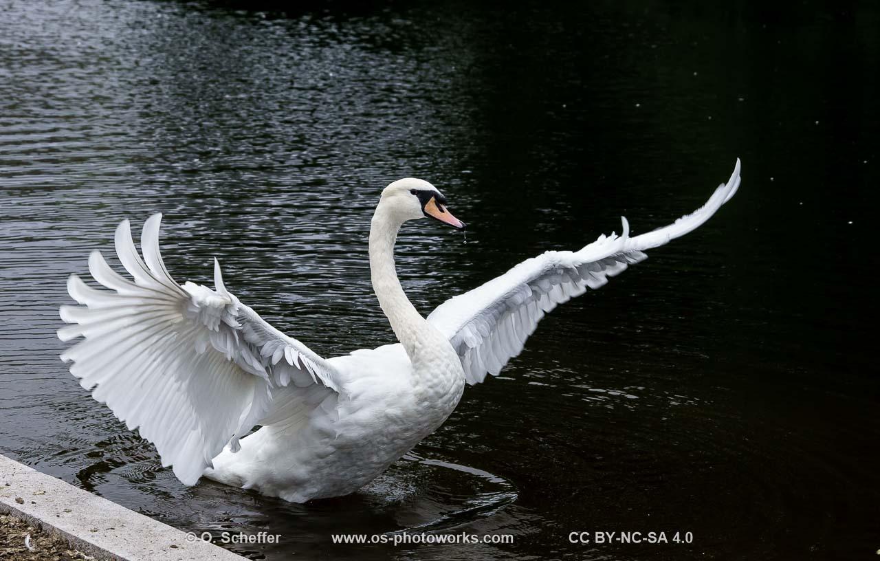 bird pictures taken at the Hofgarten Duesseldorf (Germany)